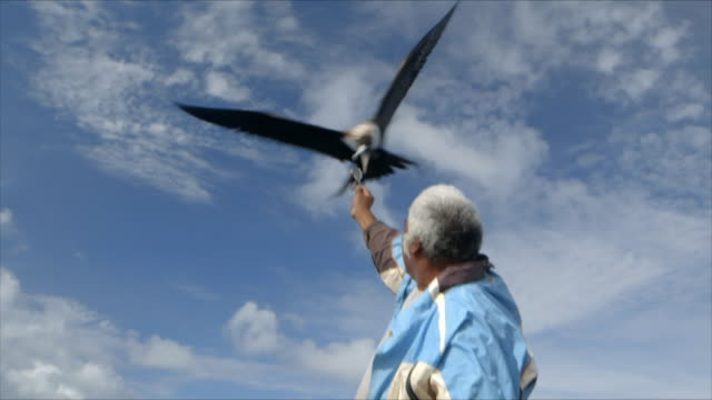 a fisherman feeds a large wild bird with fish - fisherman stock videos & royalty-free footage