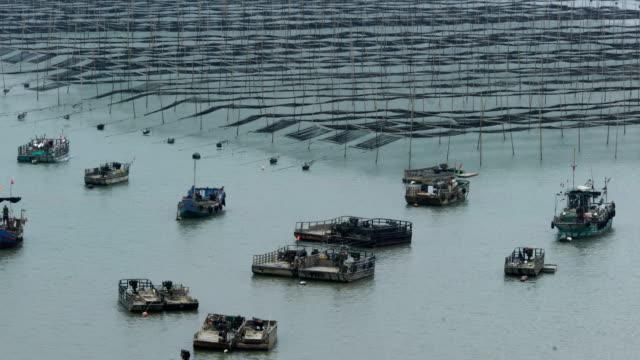 vídeos de stock e filmes b-roll de fisherman going through the coastal intertidal zone of xiapu - lamaçal