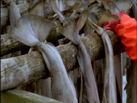 fisherman hangs out cod for drying - タラ点の映像素材/bロール