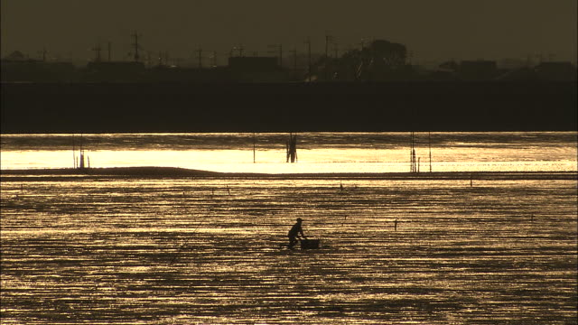 fisherman in silhouette slowly moves across tidal flat at sunset in sea of ariake, japan - ariake sea stock videos and b-roll footage