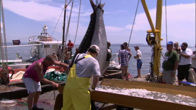 vídeos de stock e filmes b-roll de fisherman load freshly caught fish onto a crate. - captura de peixe