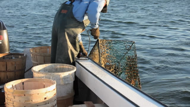 ws tu pan fisherman pulling crab pot out of water and emptying crabs into bucket / mobile bay, alabama, usa  - fisherman stock videos & royalty-free footage
