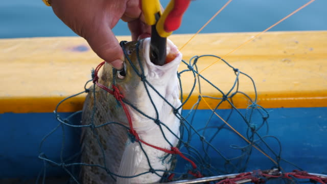 vídeos de stock, filmes e b-roll de pescador removendo gancho de isca de peixe capturado - vida no mar