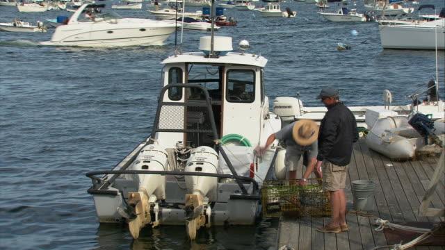 vídeos de stock e filmes b-roll de ws ha fisherman removing lobsters from trap on pier at marblehead harbor / marblehead, massachusetts, usa  - invertebrado