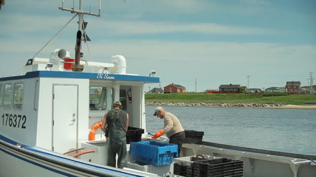 vídeos y material grabado en eventos de stock de fisherman sort the lobtser - quebec