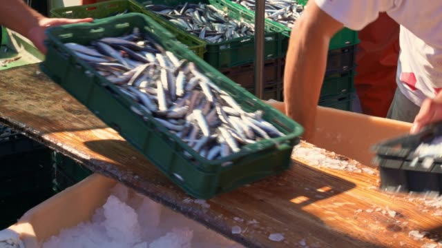 fisherman sorting the fish on board - fishing stock videos & royalty-free footage