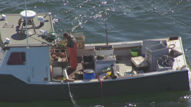 ws ts aerial pov fisherman unloading lobster pot and birds flying at mount desert island / hancock county, maine, united states - fisherman stock videos & royalty-free footage