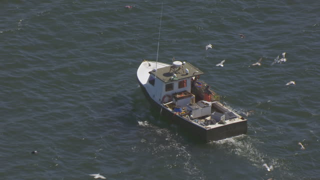 vidéos et rushes de ws ts aerial pov fisherman unloading lobster pot and birds flying at mount desert island / hancock county, maine, united states - maine