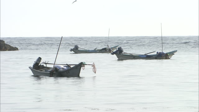 Fisherman with long poles lean over side of small boats searching for sea urchins on seabed