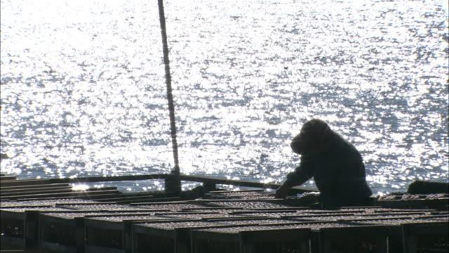 fisherman works at racks drying shishamo smelt (hypomesus japonicus), sun shimmers on sea in background - 水産業点の映像素材/bロール