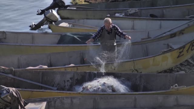 vídeos de stock, filmes e b-roll de fishermen are growing desperate as pollution and poaching threaten the ecosystem of shkodra the largest lake in the balkans which straddles albania... - de perna aberta
