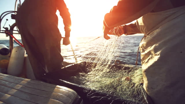 fishermen at work, pulling the nets - fishing industry stock videos & royalty-free footage