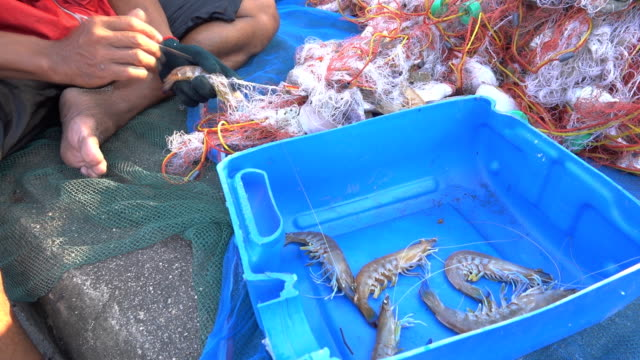 fishermen at work - crustacean stock videos & royalty-free footage