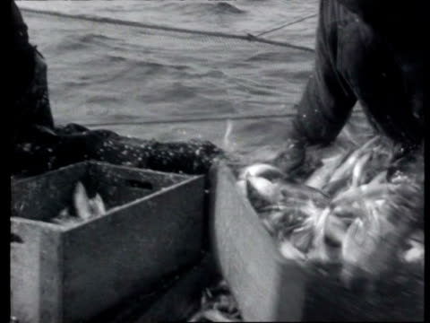 stockvideo's en b-roll-footage met fishermen bringing their nets in and taking their catch to quayside herring being sold shipped and consumed / den oever noordholland netherlands - noord holland