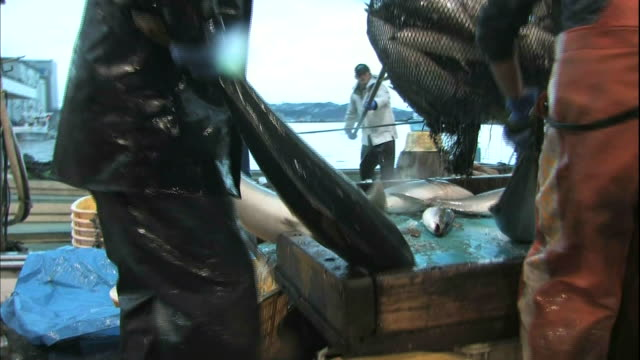 fishermen carry winter yellowtails to a container of ice at the himi fishing port in toyama, japan. - 帶 握住 個影片檔及 b 捲影像