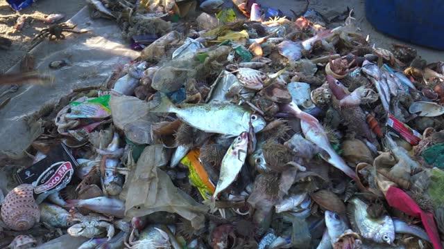 漁師は朝に魚介類を捕まえる - ゴミ捨て場点の映像素材/bロール