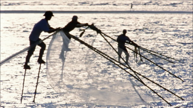 fishermen drive fish into nets by walking on stilts. - fischer stock-videos und b-roll-filmmaterial