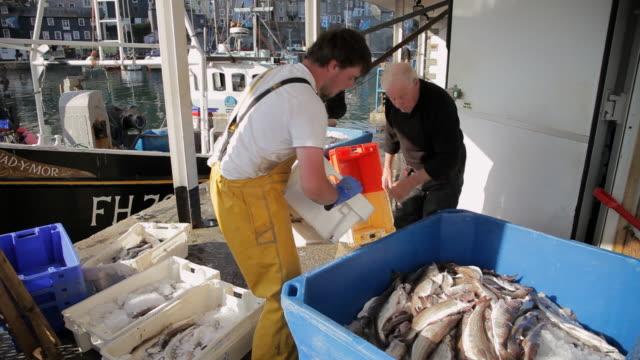ws fishermen dumping fish into containers / cornwall, england, uk - 男漁師点の映像素材/bロール