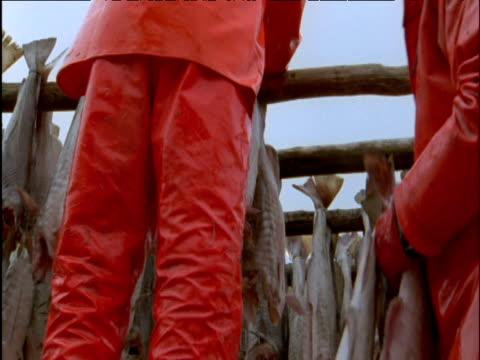 fishermen hang out cod for drying - タラ点の映像素材/bロール