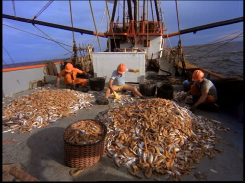 3 fishermen in hard hats sorting fish (shrimp) on deck of fishing boat in ocean / brazil - seafood stock videos & royalty-free footage