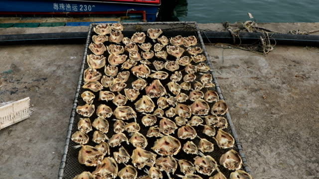 fishermen in wanshan island are drying puffer fish,zhuhai,guangdong, china - fischerboot stock-videos und b-roll-filmmaterial