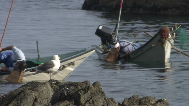 Fishermen lean over side of boats with box like structures on head to help in search for sea urchins