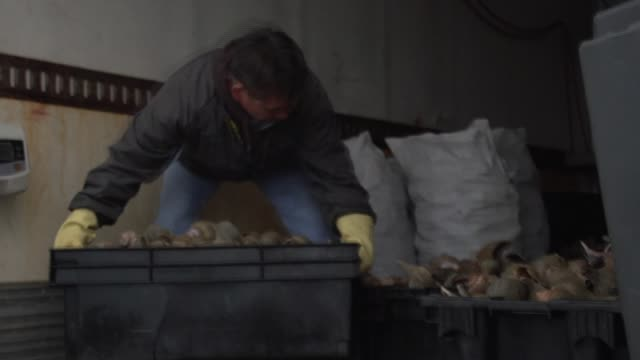 fishermen load and weigh baskets of conch onto truck - conch stock videos & royalty-free footage