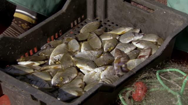 vídeos de stock, filmes e b-roll de fishermen off the coast of the kerkennah islands, tunisia - indústria da pesca