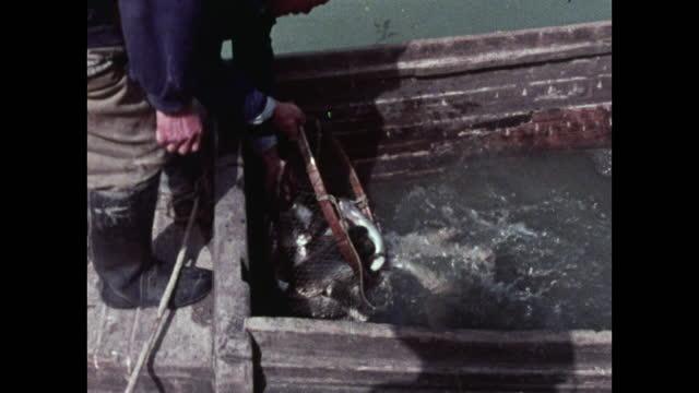 cu fishermen offload fresh fish from boat into holding tank; china - kleines wasserfahrzeug stock-videos und b-roll-filmmaterial
