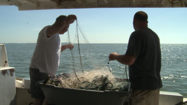 vidéos et rushes de fishermen pull an empty net from the chesapeake bay - maryland état