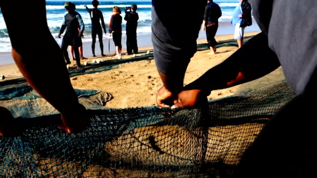 july 18, 2017: fishermen pulling in empty nets during the annual sardine run in kwazulu natal, south africa. the last few years has seen fishermen... - last stock videos & royalty-free footage