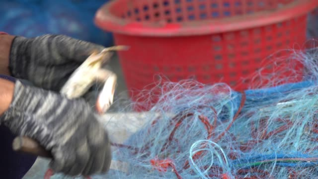 Fishermen removed crabs from fishing nets.