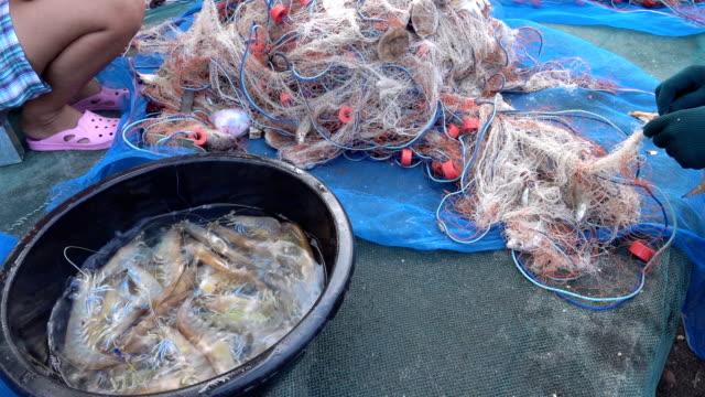 Fischer sortieren Fische im Netz