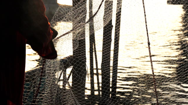 fishermen sorting fish in the net - sea bird stock videos and b-roll footage