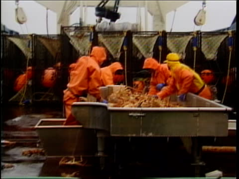 ms, shaky, fishermen standing at table sorting crabs on deck of ship, bering sea, alaska, usa  - crab stock videos & royalty-free footage