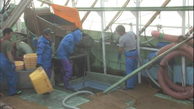 vídeos de stock e filmes b-roll de fishermen unload sauries at the hanasaki port in hokkaido, japan. - peixe fresco