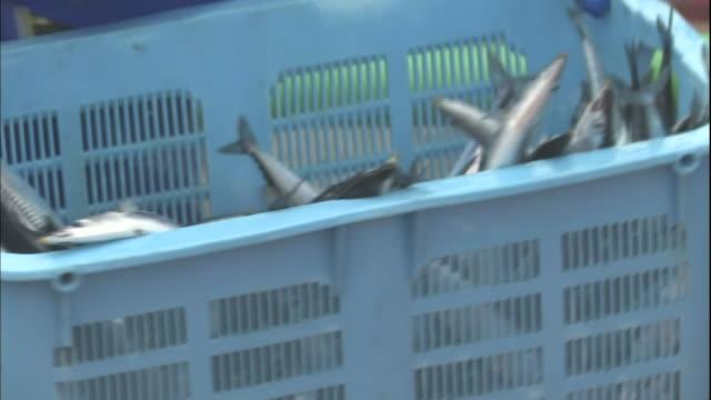 Fishermen unload sauries from tubs at the Hanasaki Port in Hokkaido, Japan.