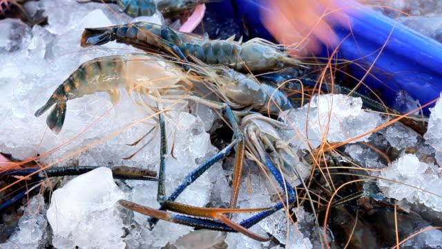 fishermen were selected shrimps.