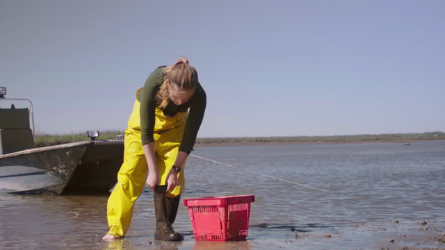 fisherwoman anchors her boat, grabs a basket, rinses out her boots and puts on gloves preparing to harvest oysters in oyster beds - captain stock videos & royalty-free footage