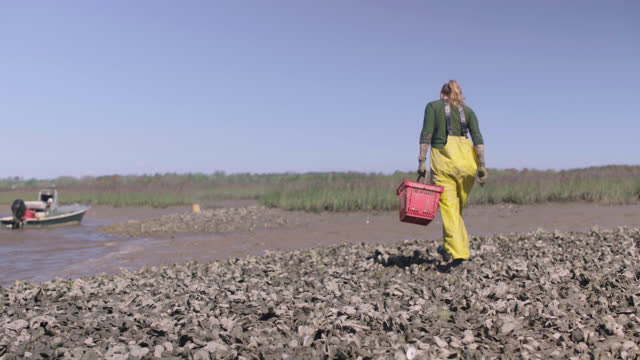 fisherwoman digs in the mud of a saltmarsh to harvest mussels, places them into a red basket, and carries the basket back to her boat - incentive stock videos & royalty-free footage