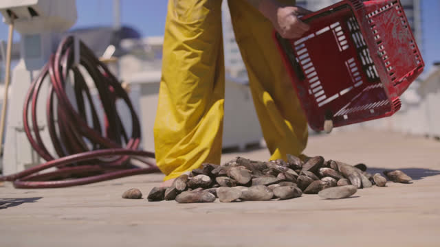 slo mo. fisherwoman dumps out a basket of fresh mussels on a commercial dock to prepare for cleaning. - incentive stock videos & royalty-free footage