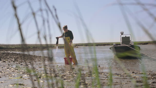 vidéos et rushes de fisherwoman stands next to her anchored boat in a marsh, rinses out her boots and puts on her gloves preparing to harvest oysters in the oyster beds - pêcheur