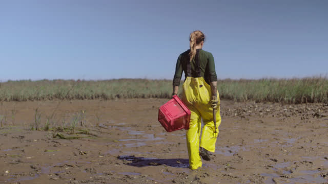 fisherwoman wipes off thick mud from her watch to check the time before heading back out to dig for more oysters in a salt marsh on the intracoastal waterway - incentive stock videos & royalty-free footage