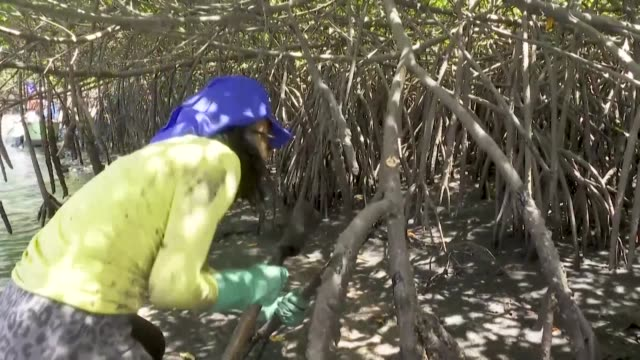 fisherwomen in brazil react to the oil spills that began appearing in early september and have been seen along a 2000 kilometer stretch of the... - northeastern brazil stock videos and b-roll footage