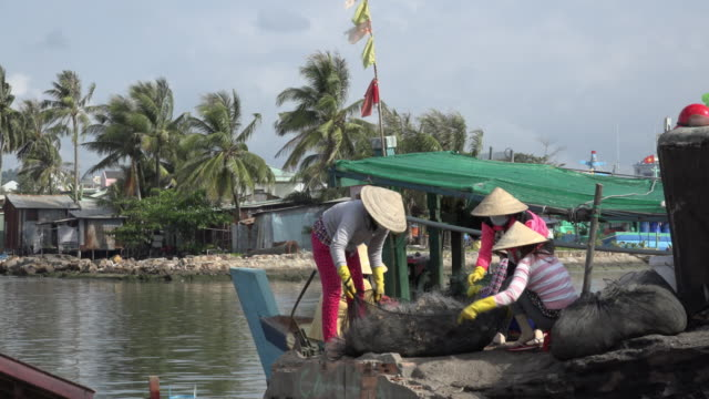 fisherwomen with catch of fish at duong dong harbour - catch of fish stock videos & royalty-free footage