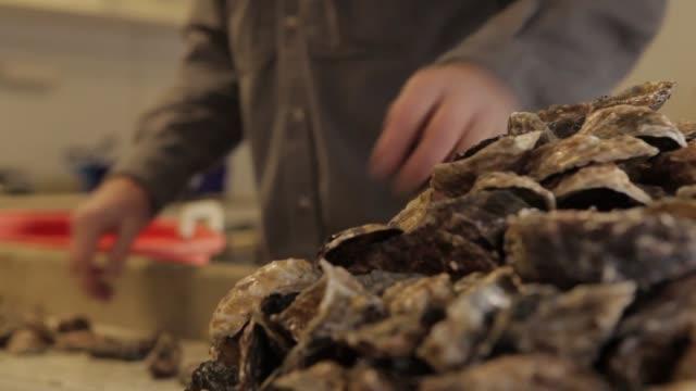 vídeos de stock e filmes b-roll de fishery employees sort oysters at hatchery - acidificação dos oceanos