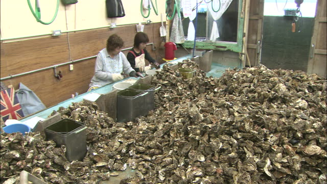 Fishery workers remove oysters from their shells at an oyster fishery in Higashihiroshima, Japan.