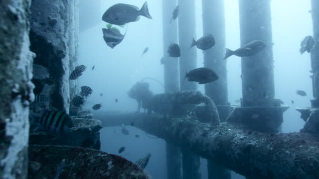 fishes and diver amongst legs of oil platform, qatar - deep stock videos & royalty-free footage