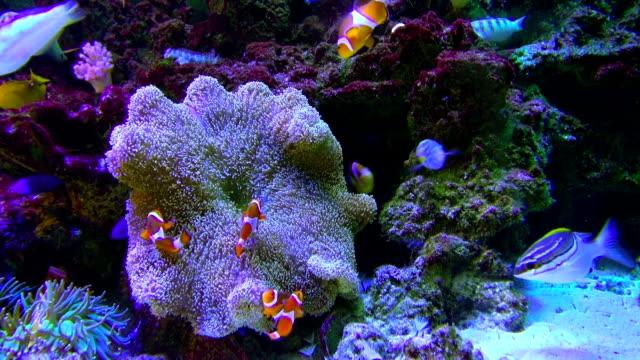 fishes in aquarium - 水族館点の映像素材/bロール