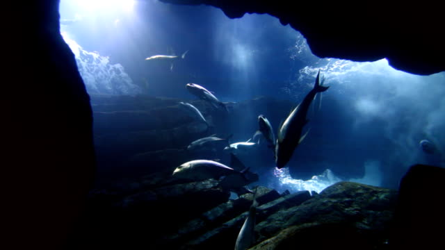 fishes in big aquarium - salmon stock videos & royalty-free footage